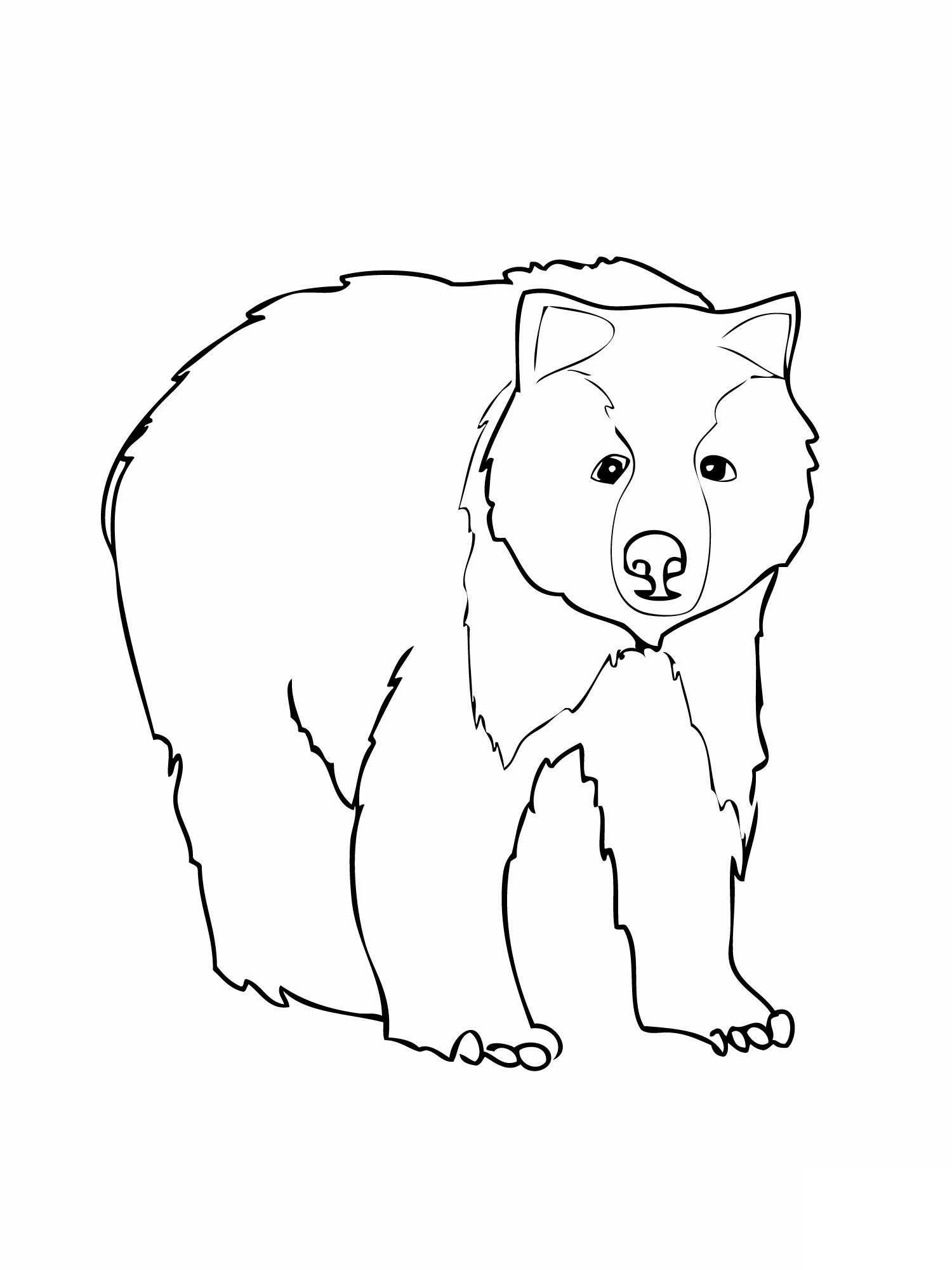 coloring pages of bears grizzly bear coloring pages kidsuki pages of coloring bears