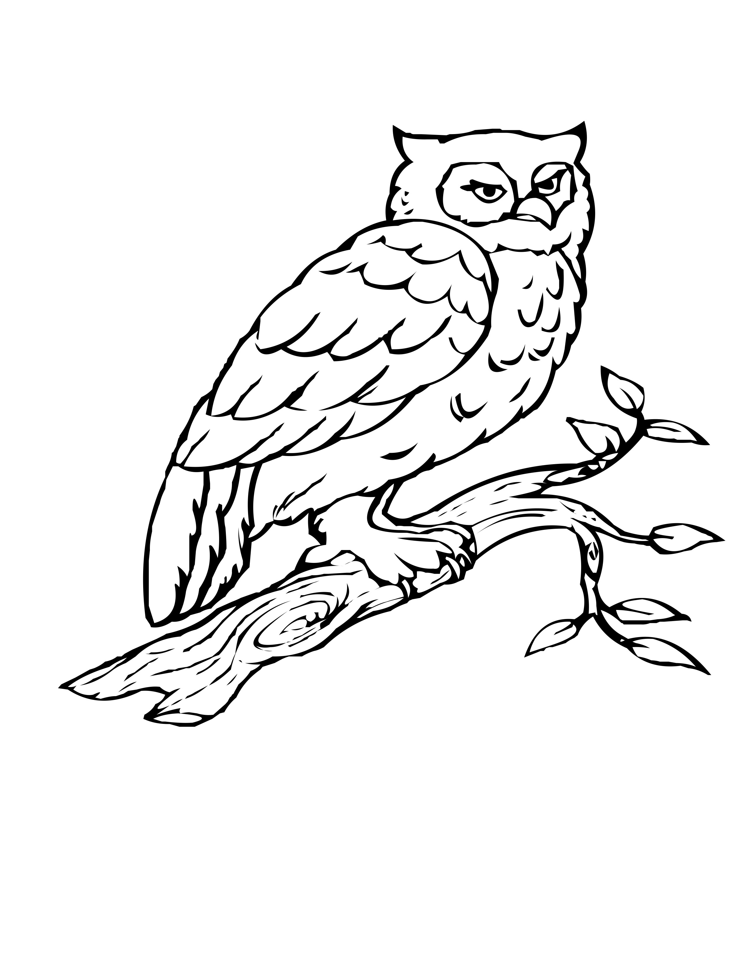 coloring pages of birds bird coloring pages coloring birds of pages
