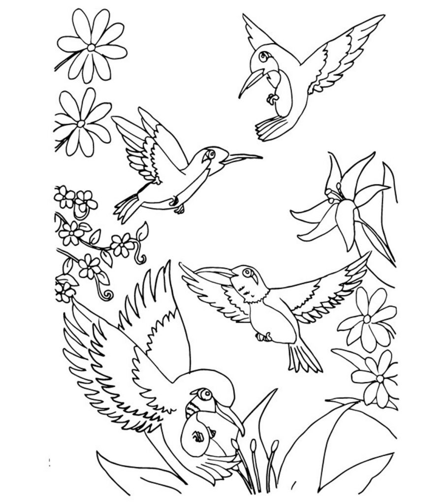 coloring pages of birds top 10 hummingbird coloring pages for your toddler coloring birds of pages