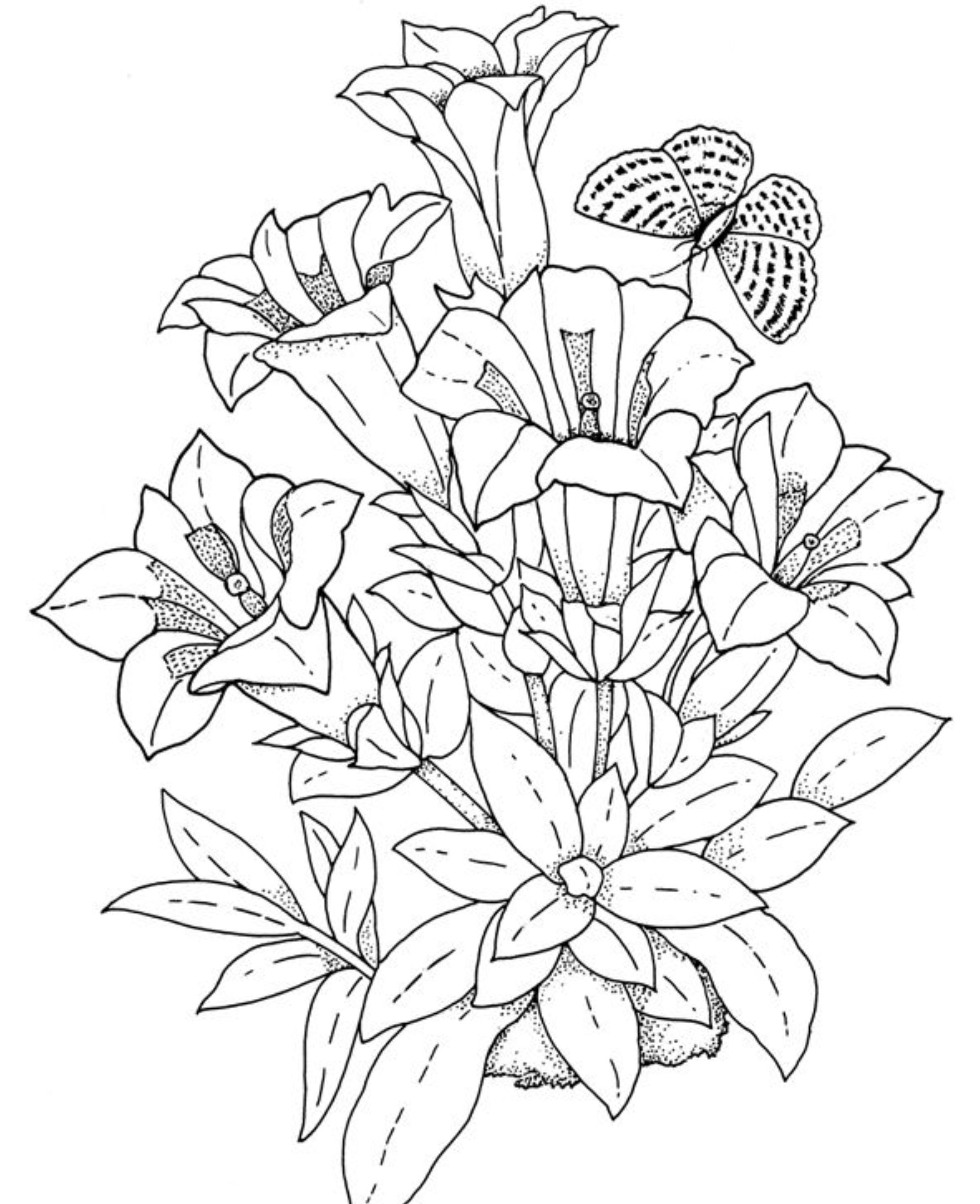 coloring pages of flowers flower coloring pages for adults at getdrawings free coloring of flowers pages