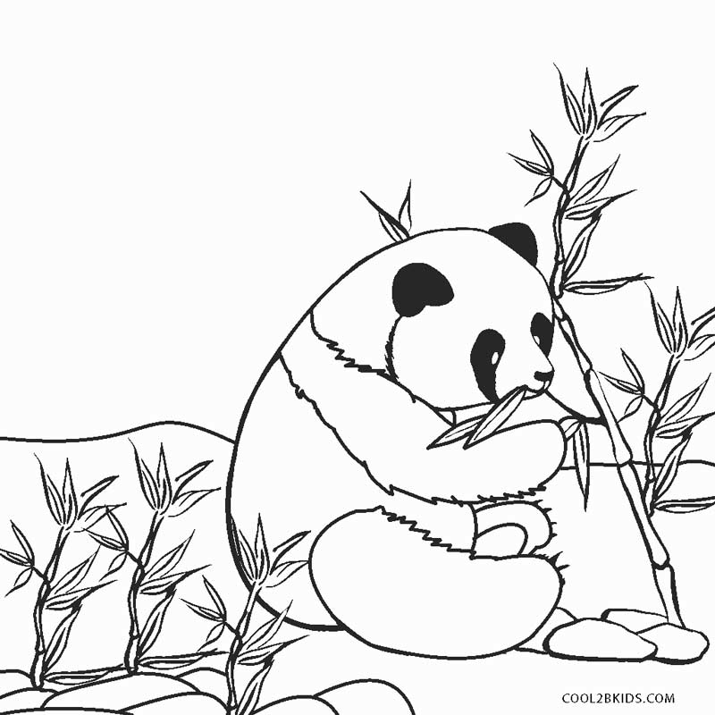 coloring pages of pandas cute panda with a bamboo lantern coloring page free pages coloring of pandas