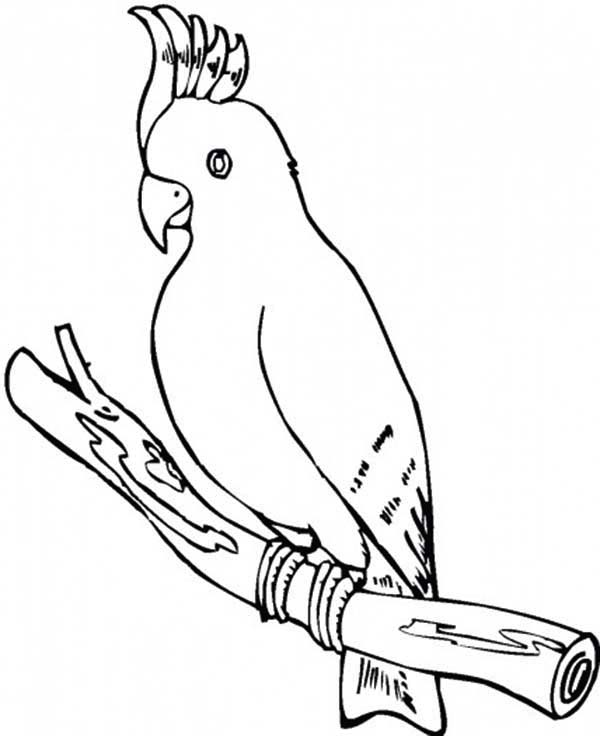 coloring pages of parrots coloring pages of parrots coloring parrots pages of