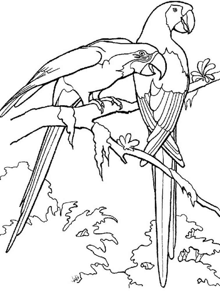 coloring pages of parrots parrot on branch coloring page download print online of parrots coloring pages