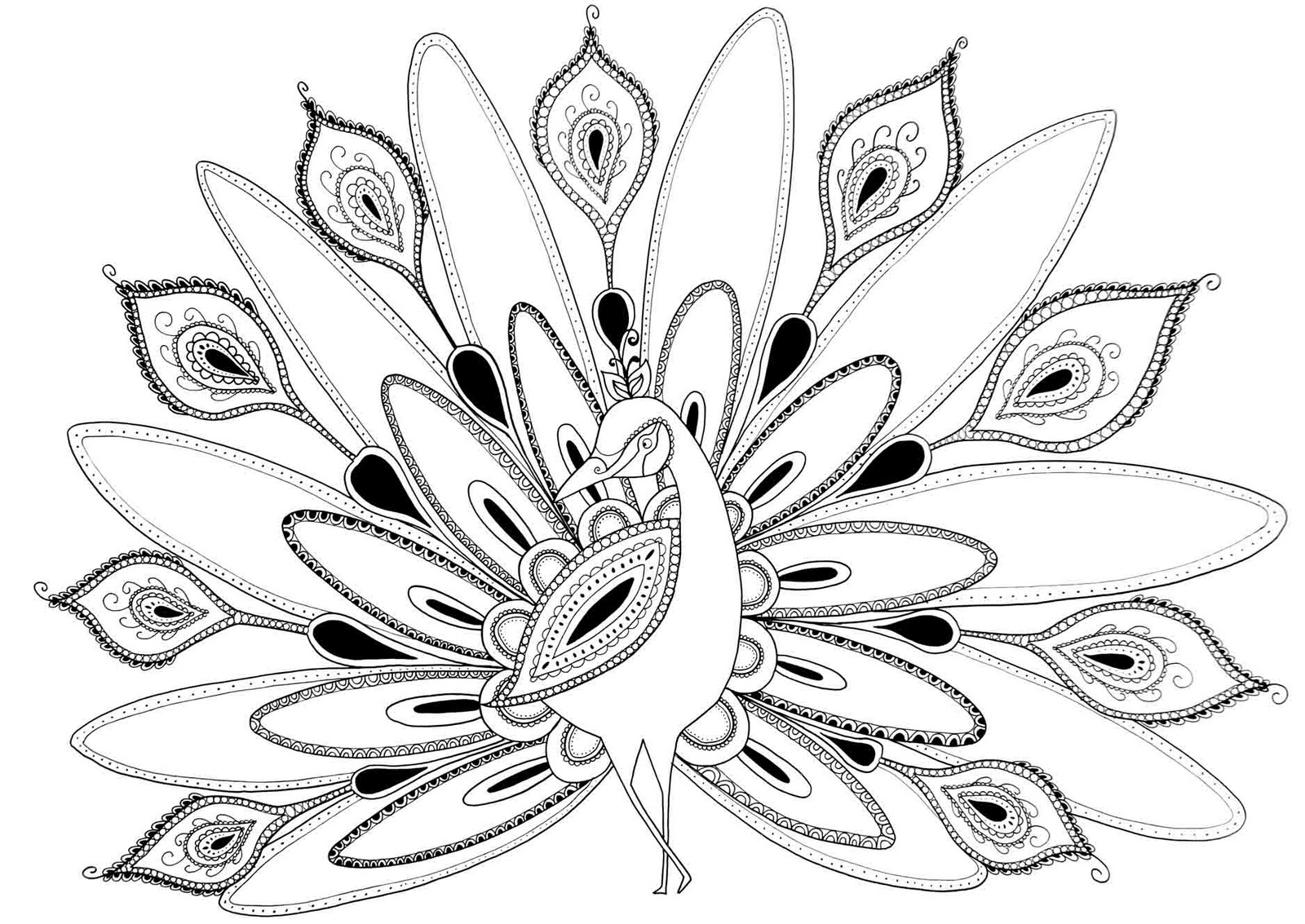 coloring pages of peacock free peacock adult coloring page craftfoxes coloring peacock of pages