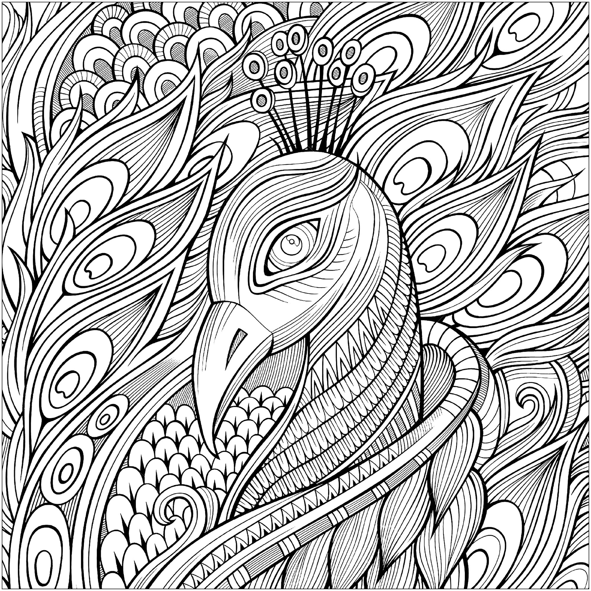 coloring pages of peacock squared coloring page of a peacock peacocks adult coloring peacock pages of