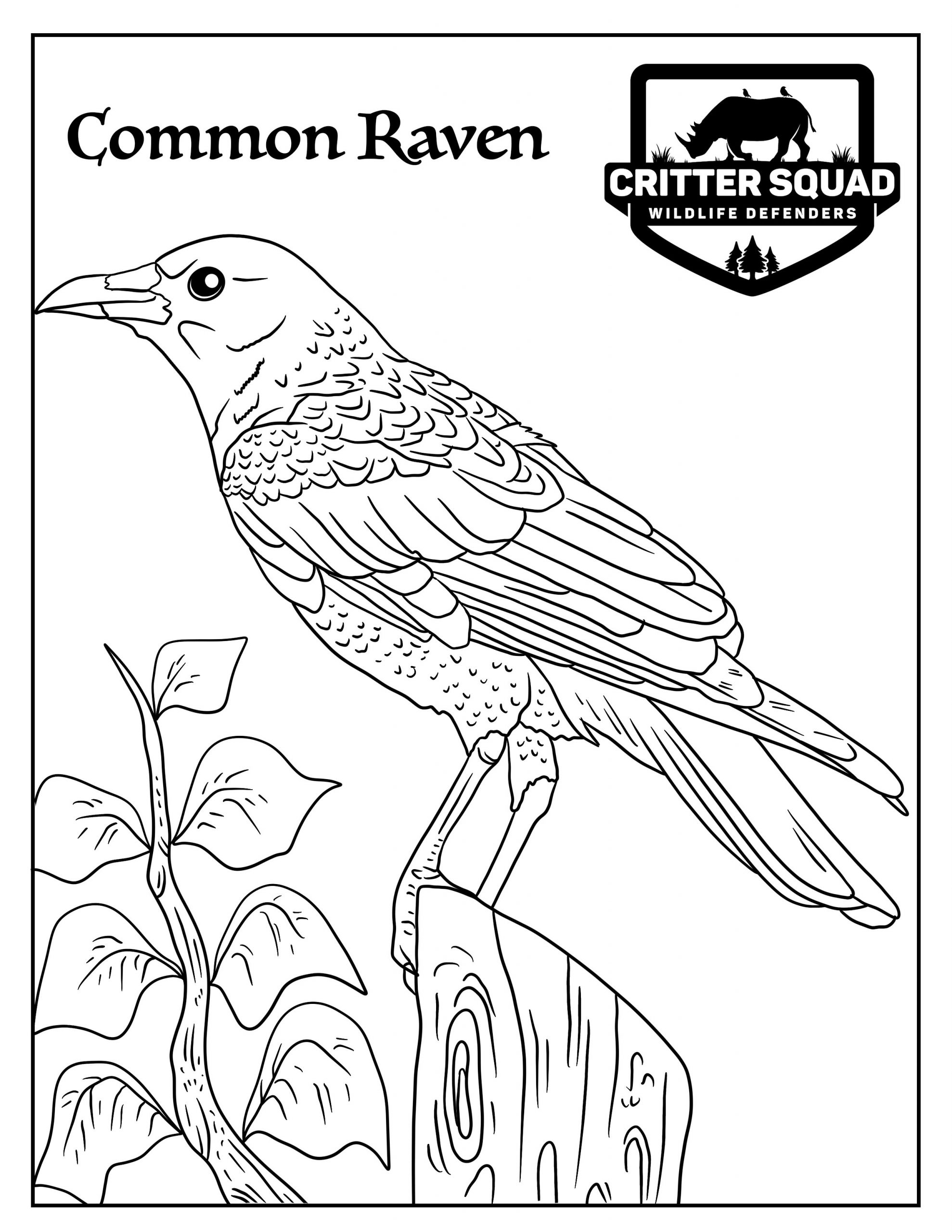 coloring pages raven baltimore ravens coloring page coloring home coloring raven pages