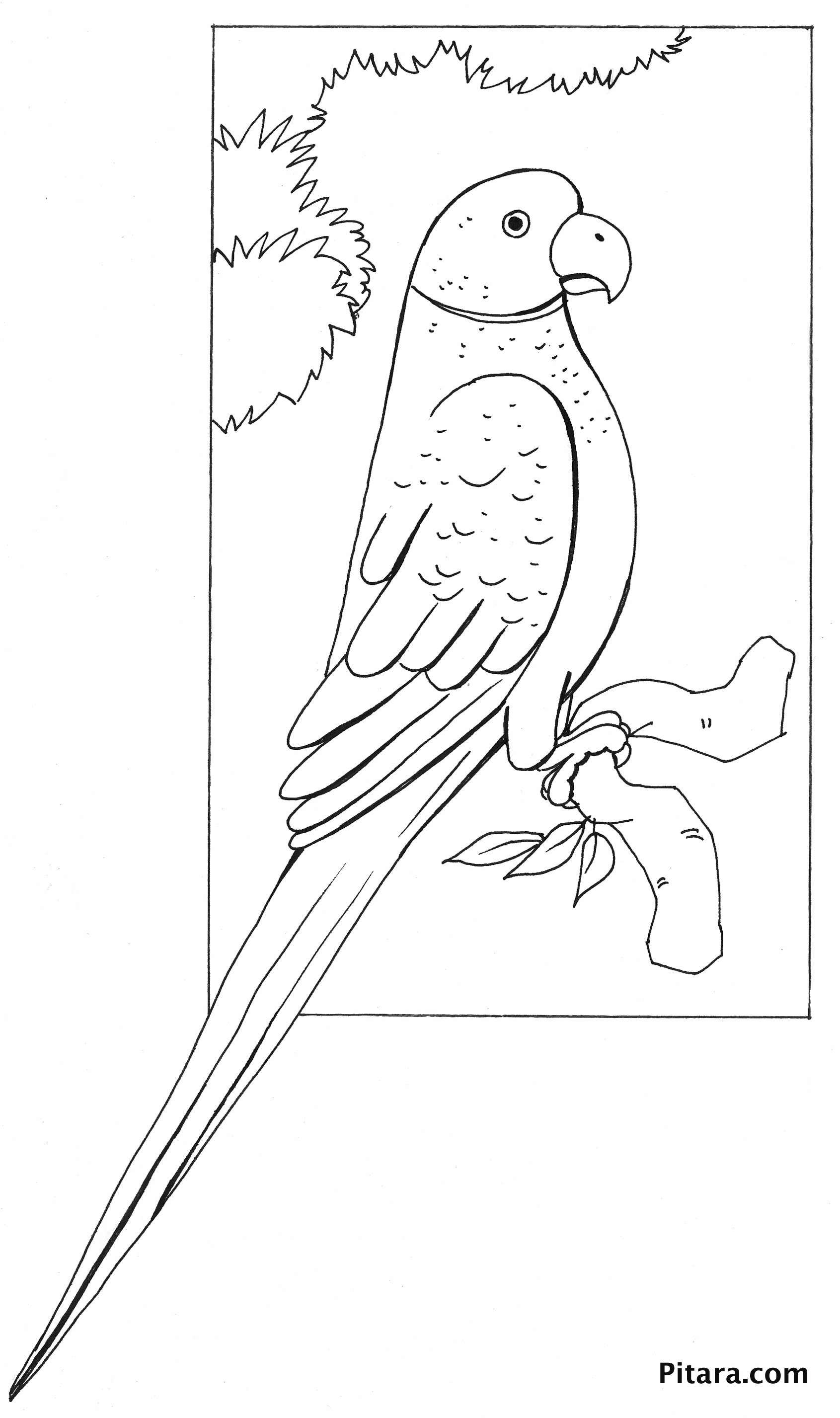 coloring parrot for kids amazon parrot coloring download amazon parrot coloring parrot kids for coloring