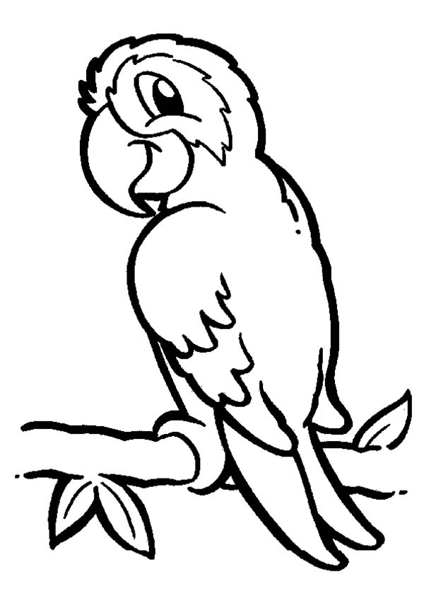 coloring parrot for kids cute parrot coloring page free printable coloring pages kids for parrot coloring