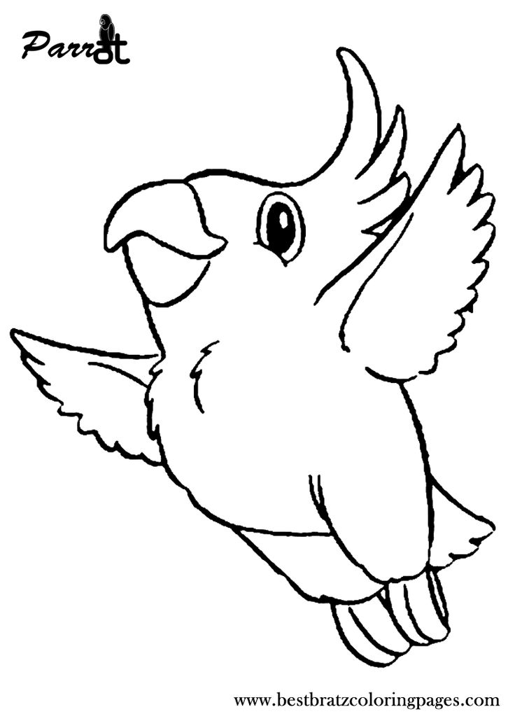 coloring parrot for kids free printable parrot coloring pages for kids animal place coloring for parrot kids