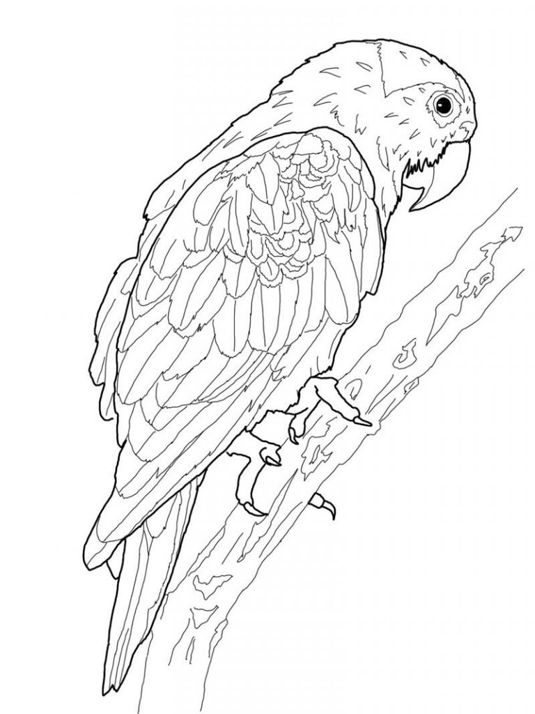 coloring parrot for kids free printable parrot coloring pages for kids animal place coloring kids for parrot