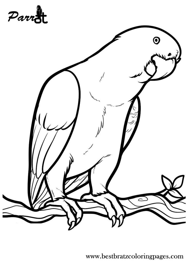 coloring parrot for kids free printable parrot coloring pages for kids animal place for kids parrot coloring