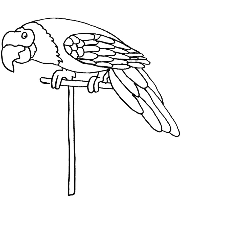 coloring parrot for kids free printable parrot coloring pages for kids animal place for parrot coloring kids