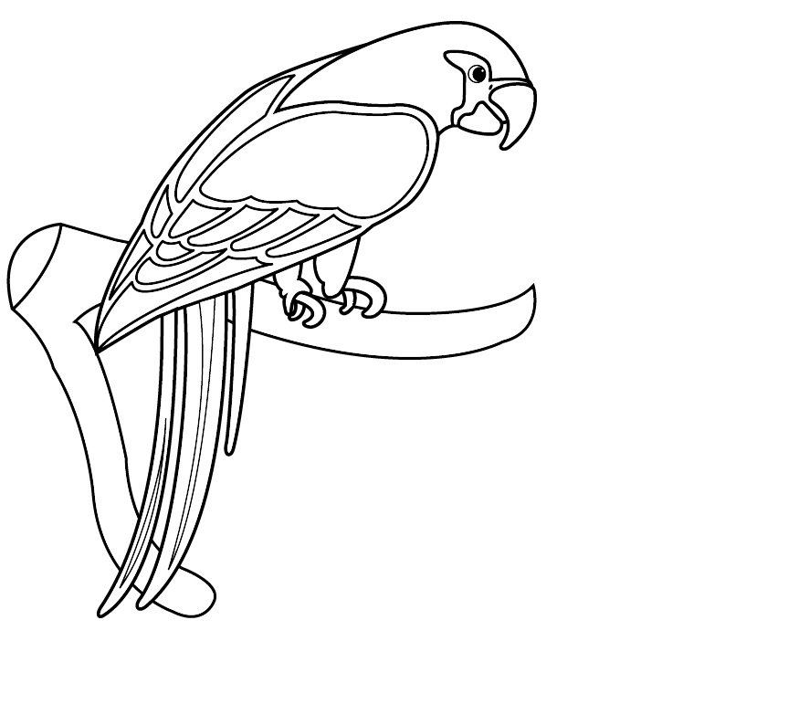 coloring parrot for kids free printable parrot coloring pages for kids for coloring kids parrot