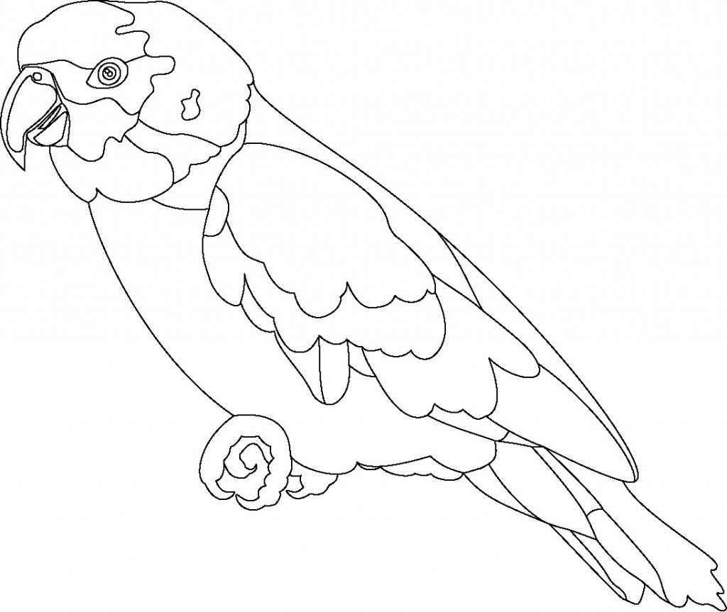 coloring parrot for kids free printable parrot coloring pages for kids parrot kids for coloring