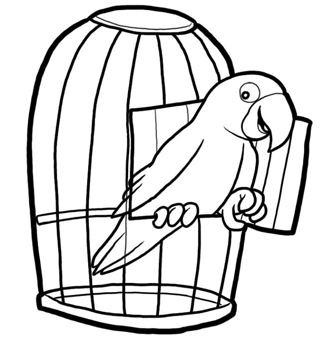 coloring parrot for kids parrot coloring pages kiddo coloring kids parrot for