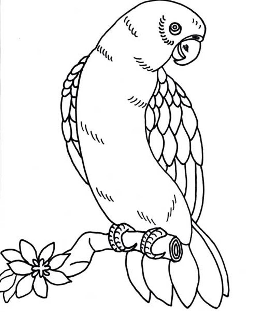 coloring parrot for kids parrot looking for food coloring page download print parrot for kids coloring