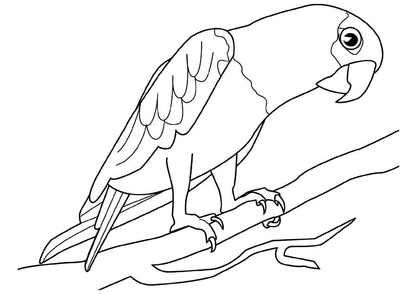 coloring parrot for kids parrots coloring pages to download and print for free kids for coloring parrot