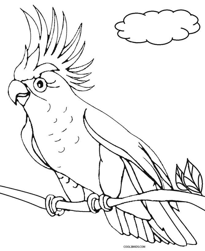 coloring parrot for kids tropical bird coloring pages at getcoloringscom free for parrot coloring kids