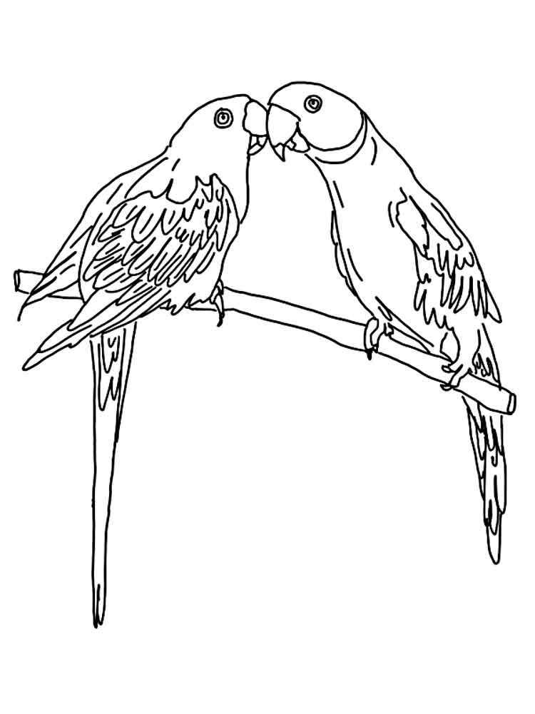 coloring parrot images free parrot coloring pages for adults printable to coloring parrot images
