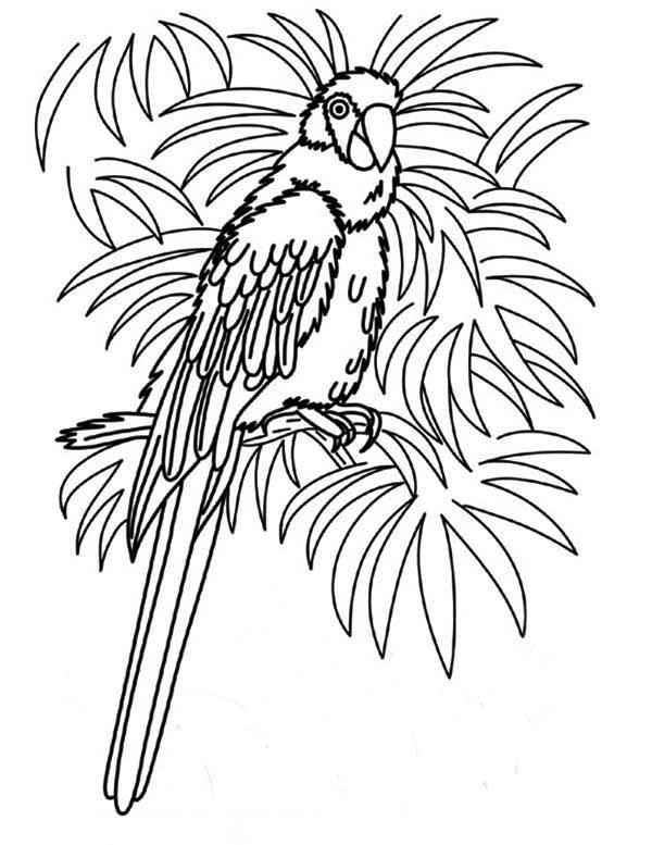 coloring parrot images free printable parrot coloring pages for kids images parrot coloring