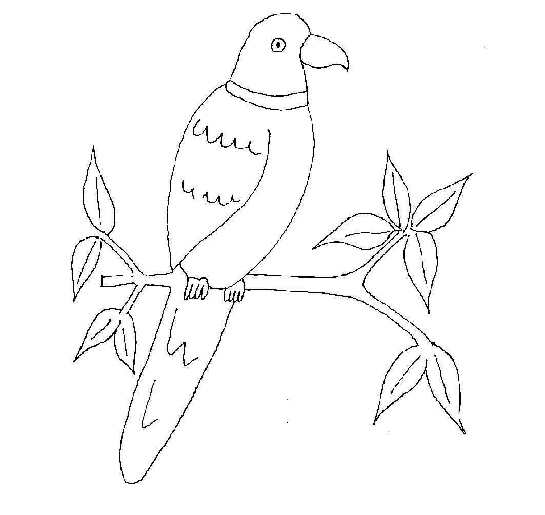 coloring parrot images parrot coloring pages kiddo images coloring parrot