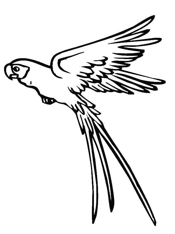 coloring parrot images parrot coloring pages kiddo parrot images coloring