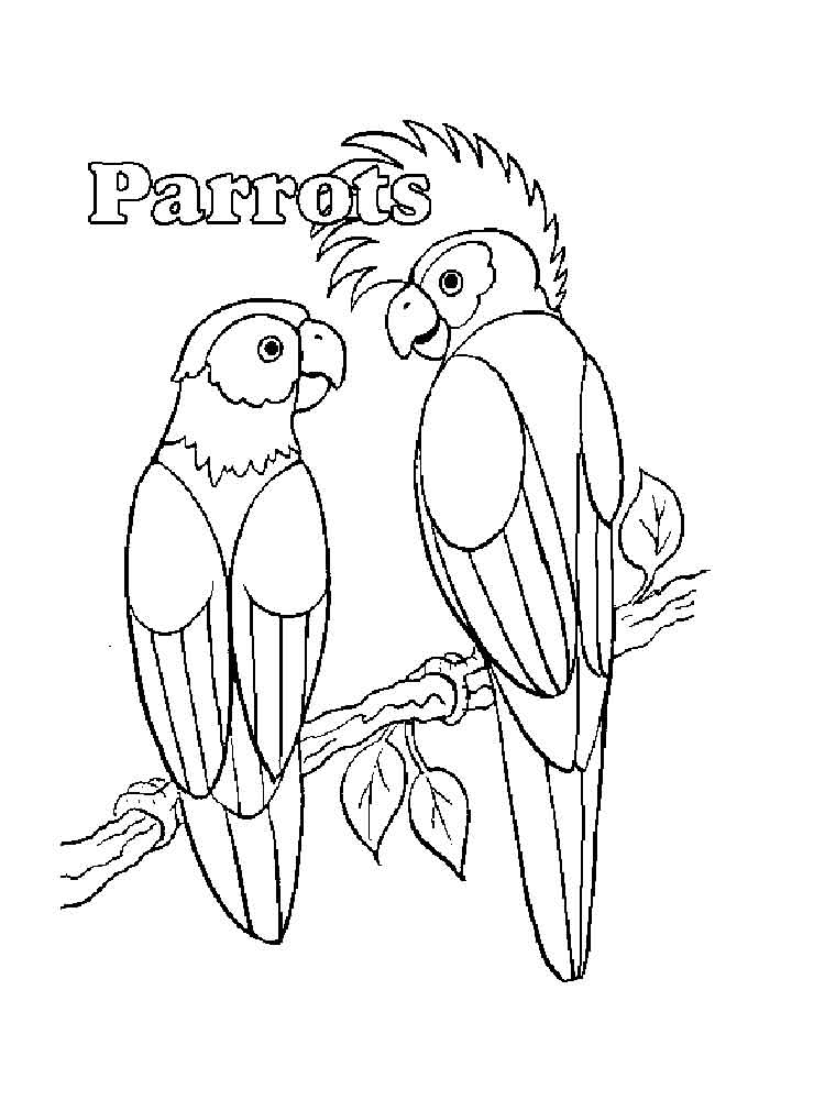 coloring parrot images parrot drawing with colour at getdrawingscom free for coloring parrot images