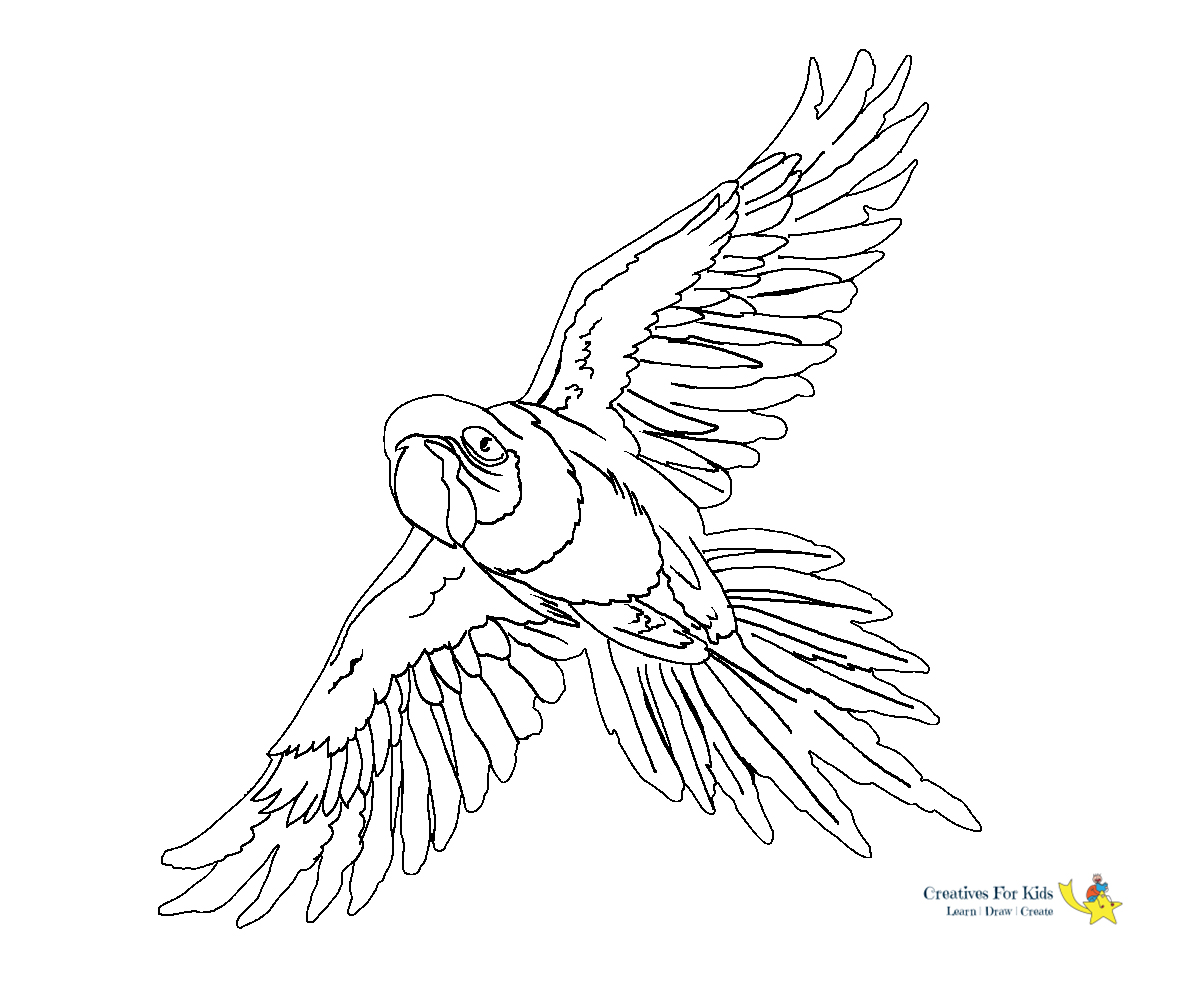 coloring parrot images parrot is flying coloring page download print online images parrot coloring