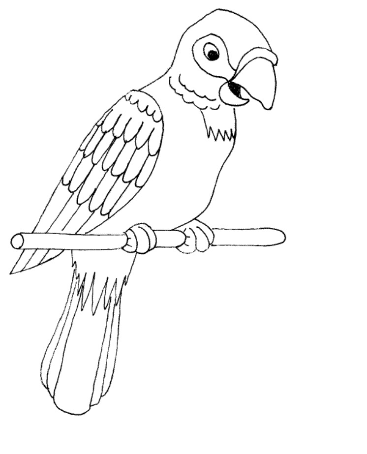 coloring parrot images parrot looking for food coloring page download print coloring images parrot