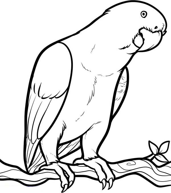 coloring parrot images tropical bird coloring pages at getcoloringscom free parrot coloring images