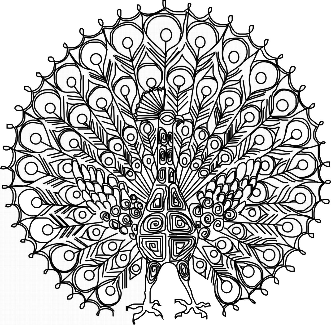 coloring peacock color page beautiful peacock adult colouring adult colouring page peacock coloring color