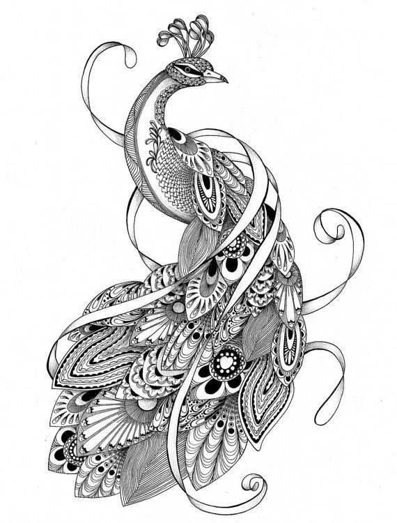 coloring peacock color page instant download coloring page peacock zentangle by peacock coloring page color