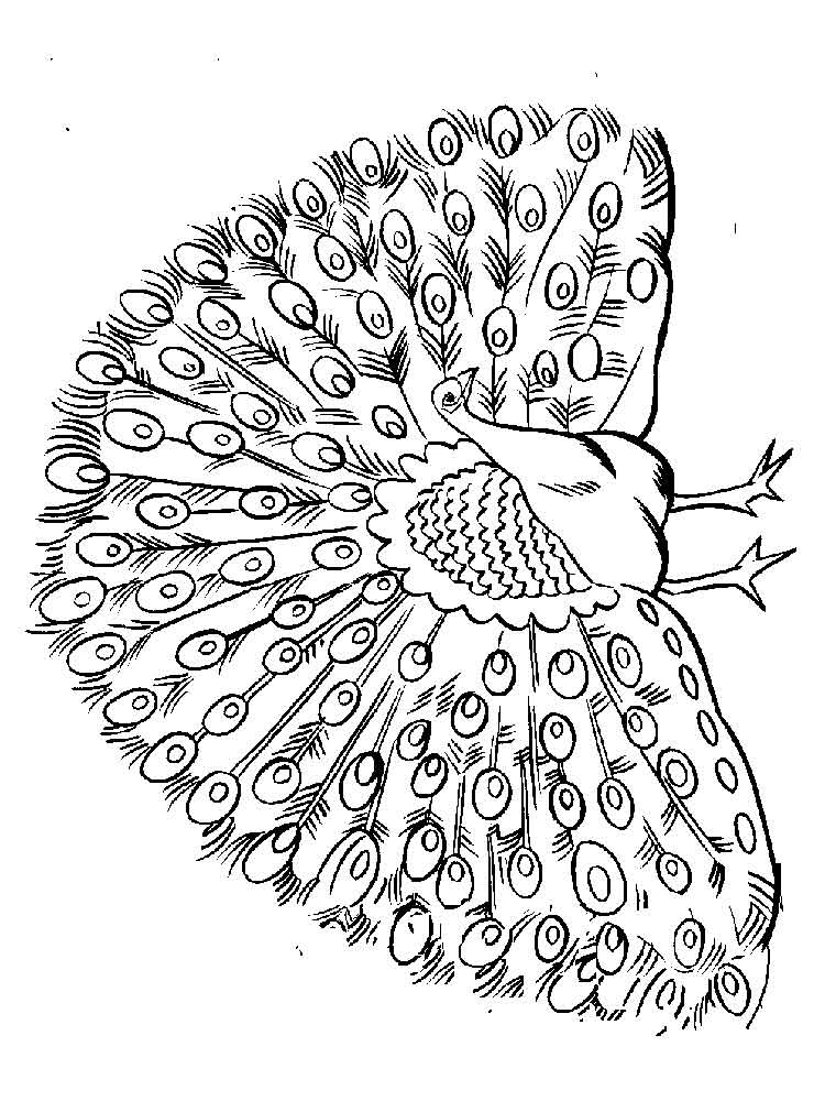 coloring peacock color page peacock coloring pages coloring color page peacock