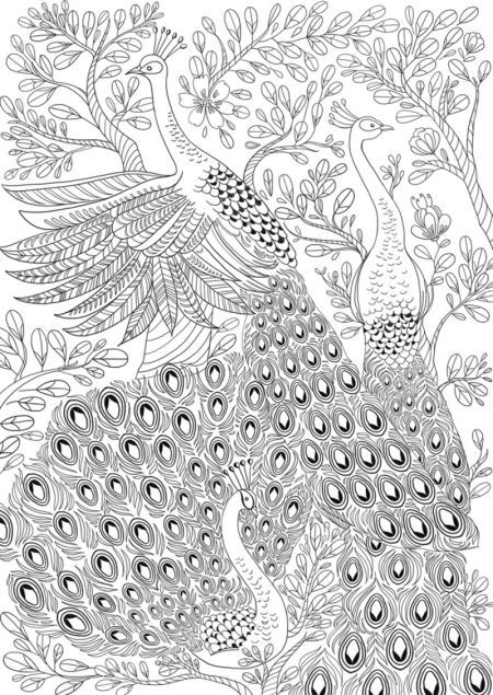 coloring peacock color page peacock coloring pages getcoloringpagescom color coloring peacock page