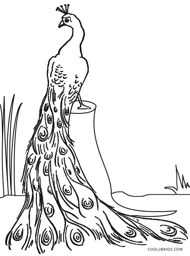 coloring peacock color page peacocks coloring pages download and print for free coloring peacock page color
