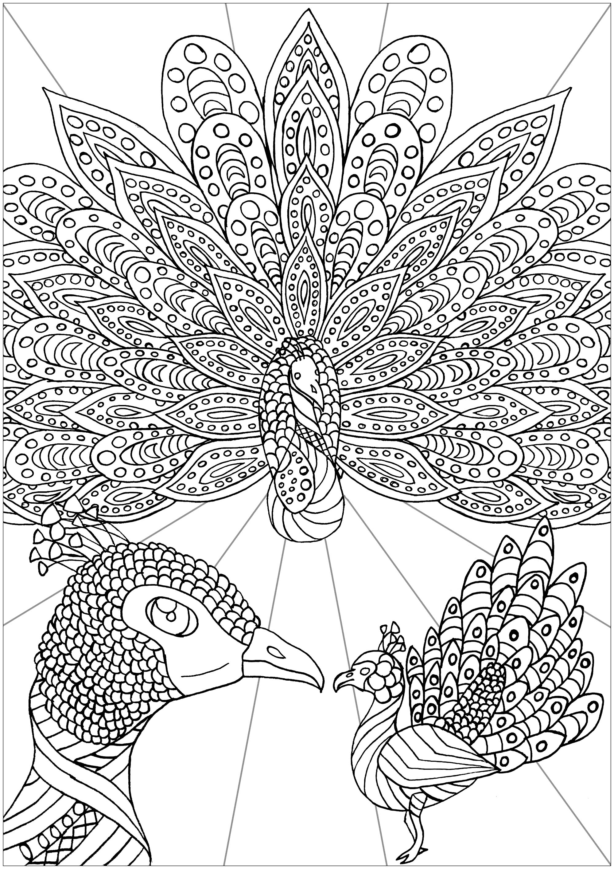 coloring peacock color page printable peacock coloring pages for kids color peacock page coloring