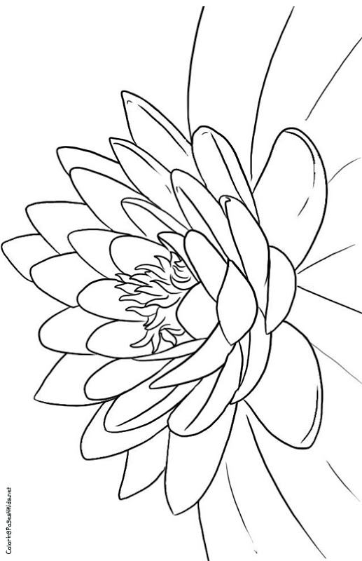 coloring pics of flowers free printable flower coloring pages for kids flowers of coloring pics