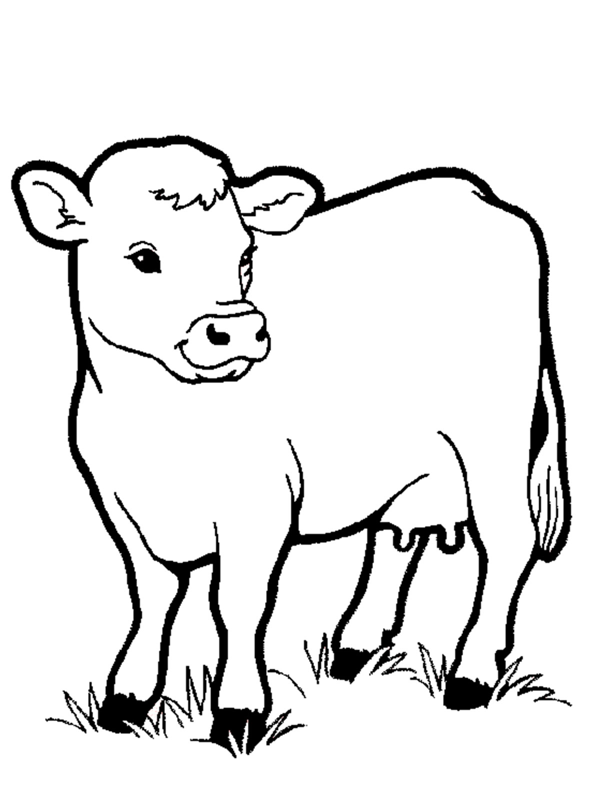coloring picture of cow outline of a cow free download on clipartmag picture cow coloring of