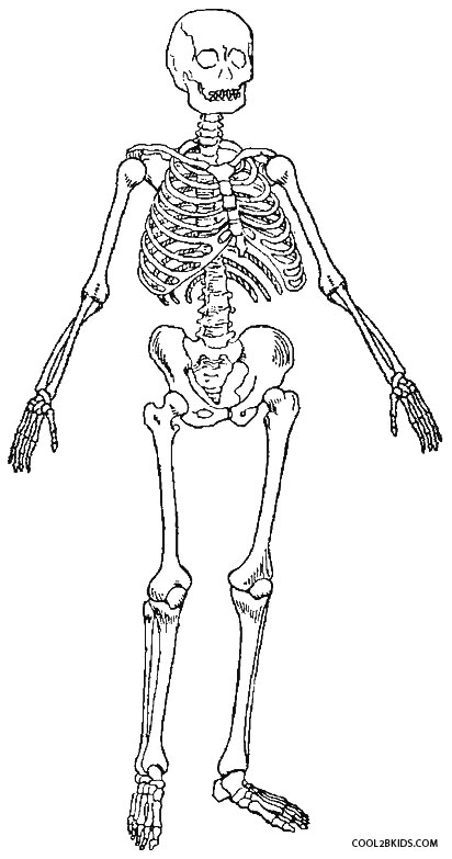coloring picture of skeleton free printable skeleton coloring pages for kids skeleton of coloring picture