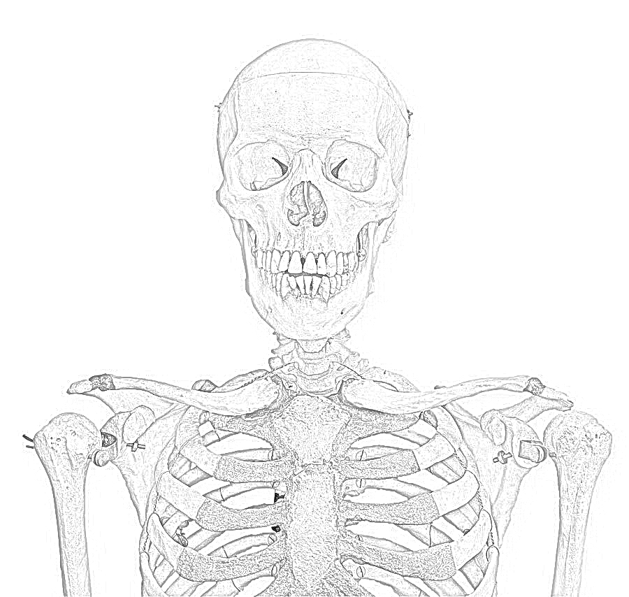 coloring picture of skeleton picture of human skeleton coloring page netart of coloring skeleton picture