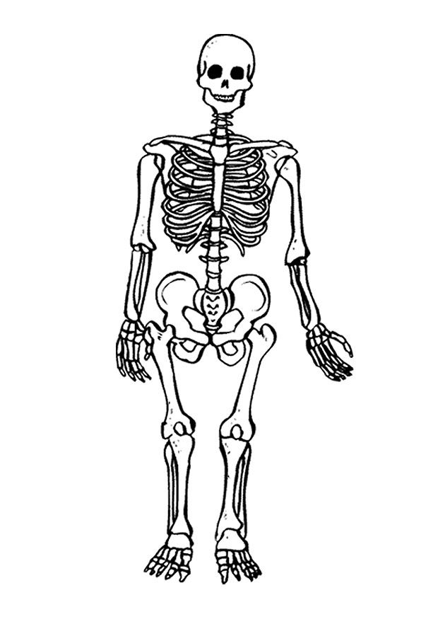 coloring picture of skeleton printable skeleton coloring pages for kids cool2bkids picture coloring of skeleton
