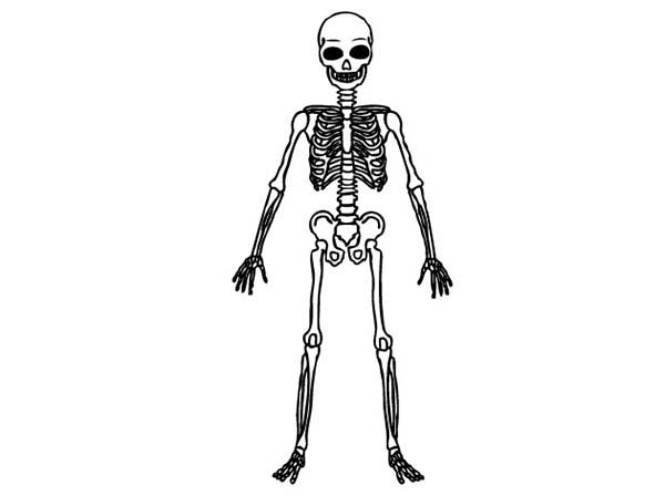 coloring picture of skeleton skeleton coloring pages to download and print for free coloring picture skeleton of