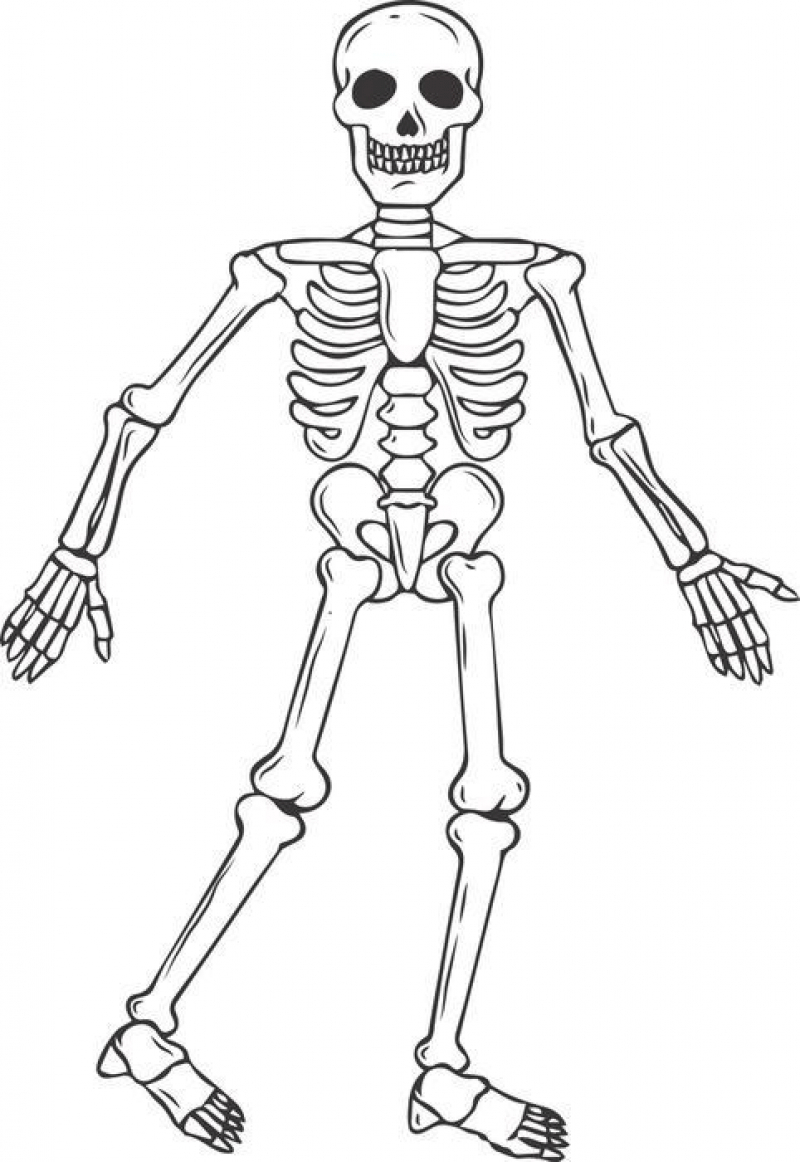 coloring picture of skeleton skeleton picture for kids clipartsco of skeleton picture coloring