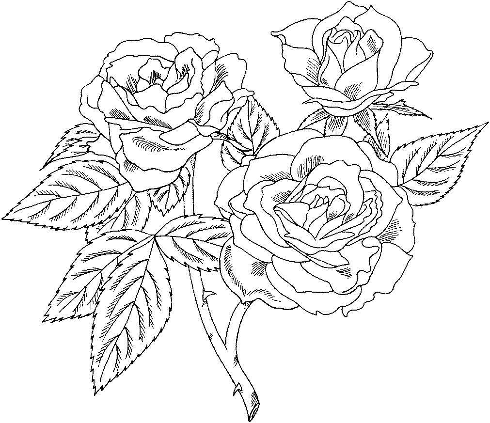 coloring picture rose free printable roses coloring pages for kids picture rose coloring