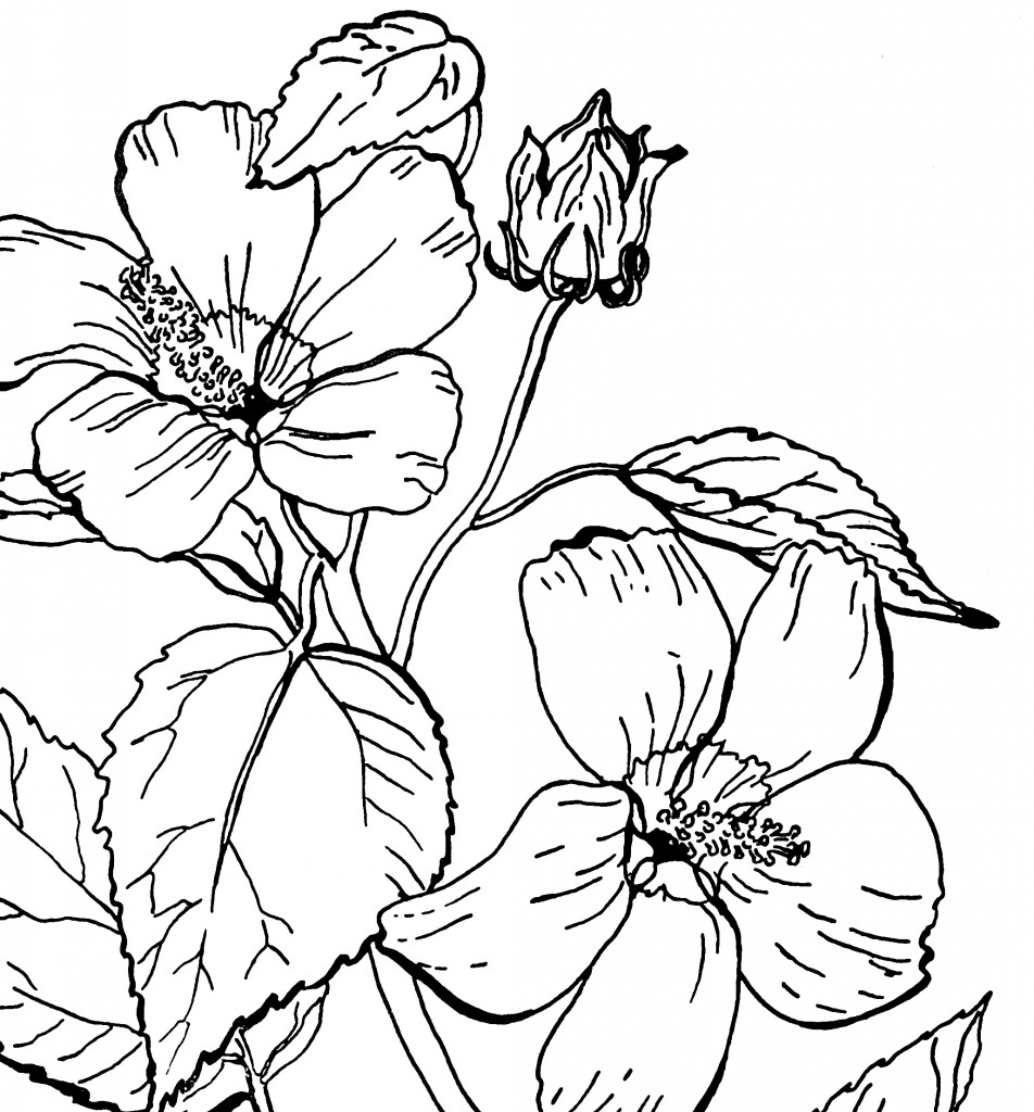 coloring picture rose free roses printable adult coloring page the graphics fairy picture rose coloring