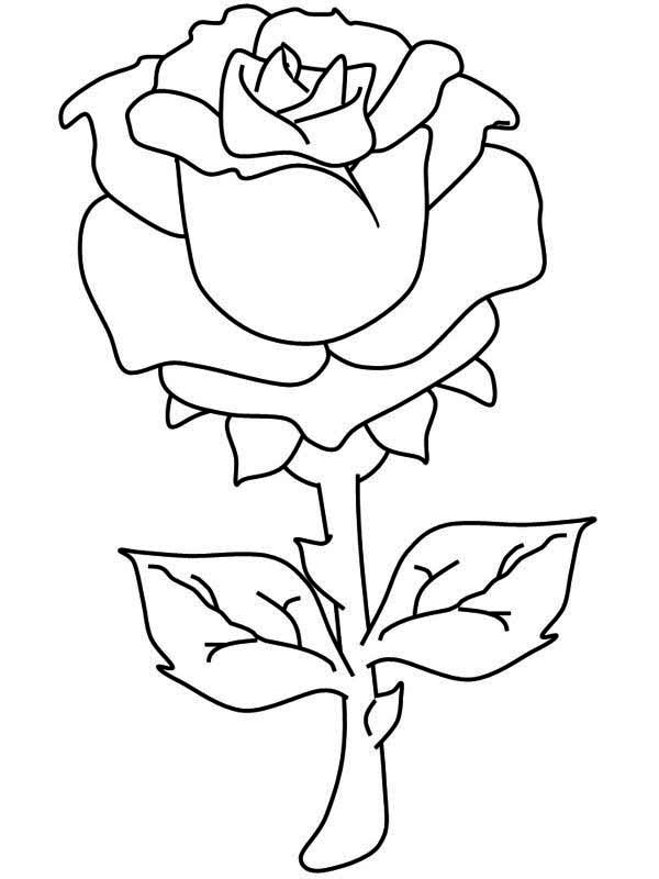 coloring picture rose one beautiful rose coloring page one beautiful rose rose picture coloring