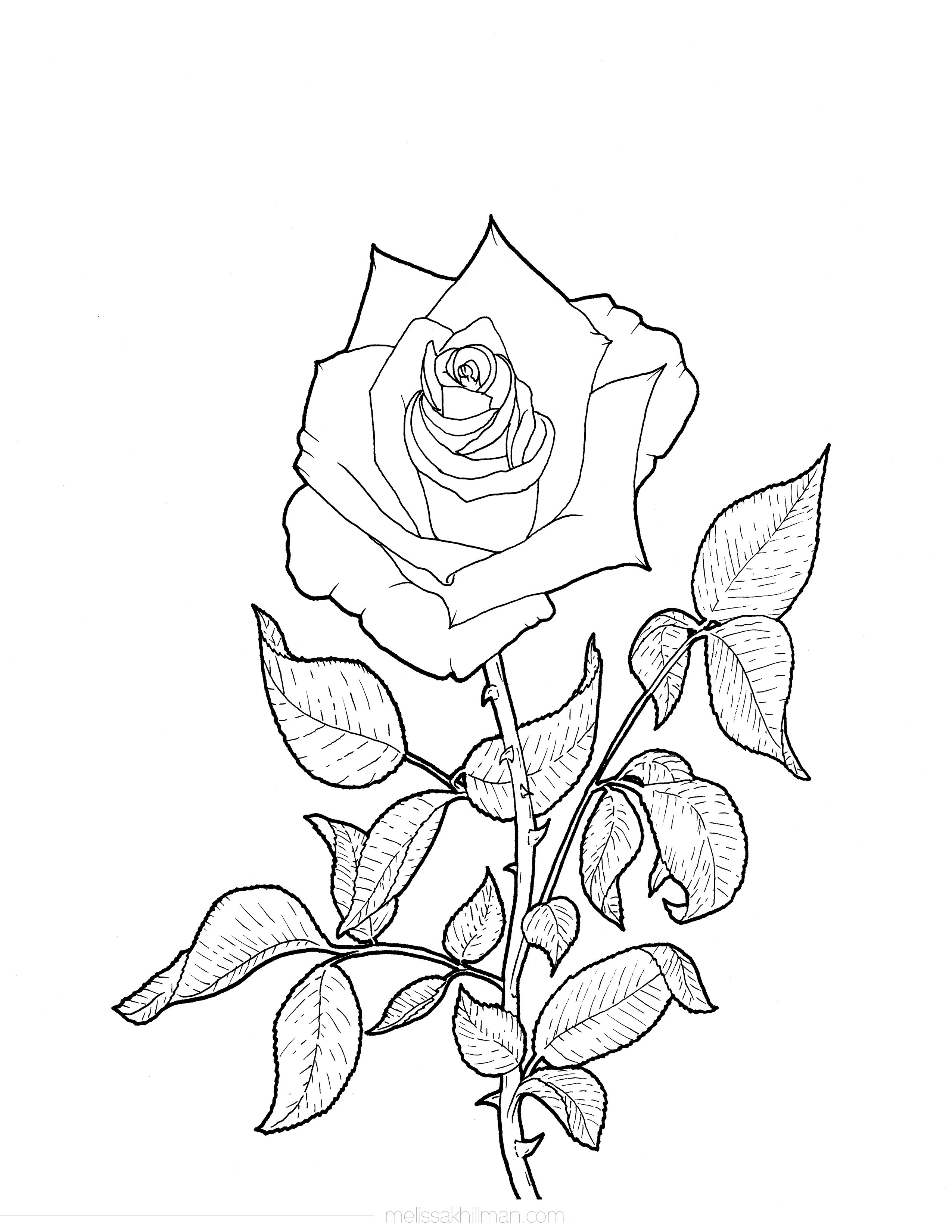 coloring picture rose rose coloring page rose picture coloring