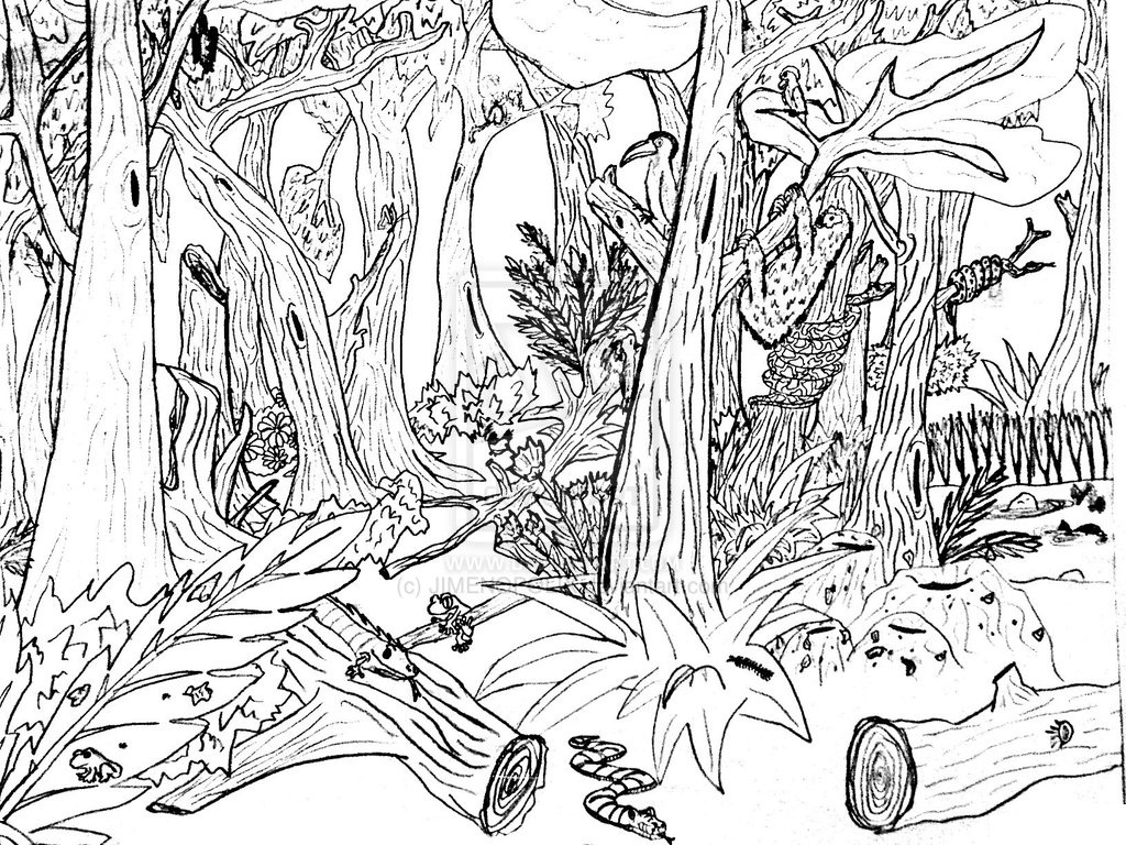 coloring pictures nature printable nature coloring pages for kids cool2bkids pictures coloring nature