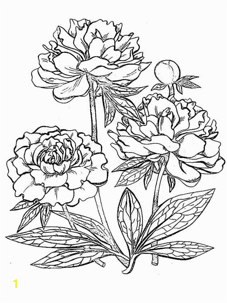coloring pictures of a flower realistic flower coloring pages divyajananiorg flower a coloring of pictures