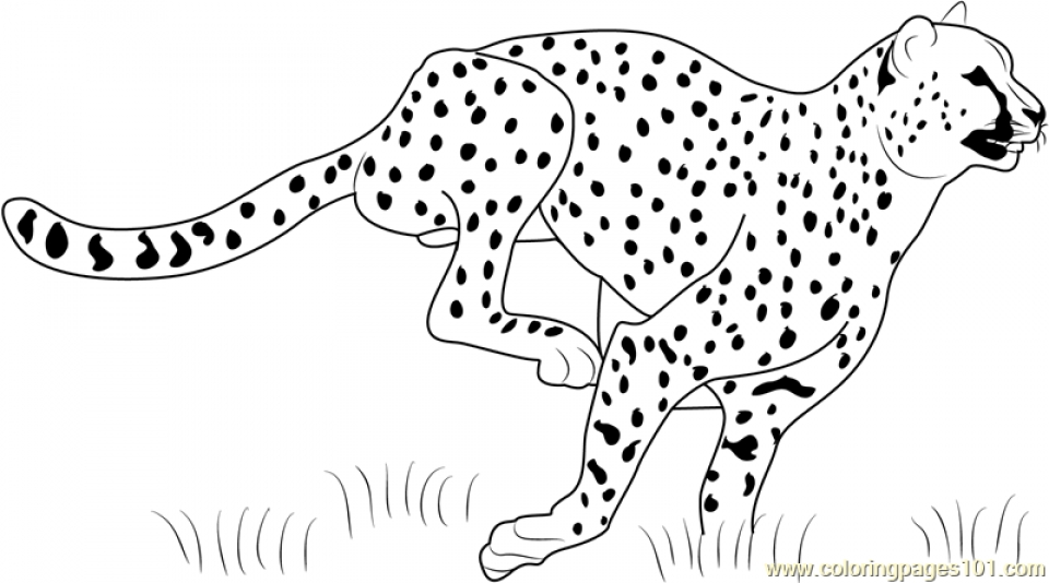 coloring pictures of cheetahs 20 free printable cheetah coloring pages of coloring cheetahs pictures